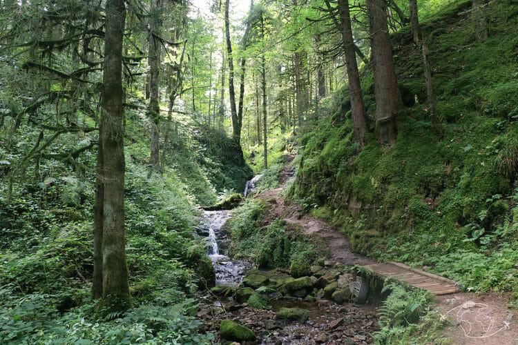 Autour de Corcieux - Dans la forêt vers le Saut de la Bourrique