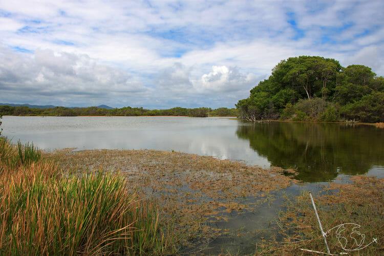 Visiter les Galapagos - Paysage de Marais - île Isabela