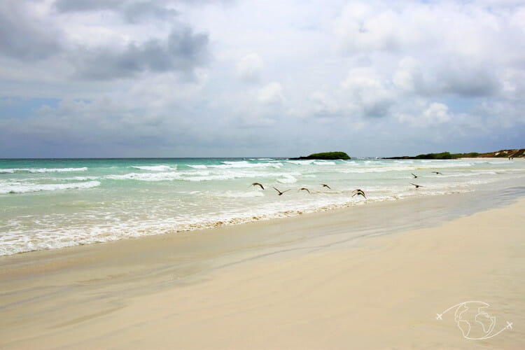 Iles Galapagos - Plage de Tortuga Bay - Ile Santa Cruz