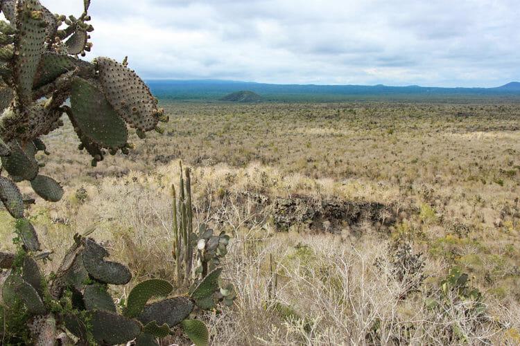 Visiter les Galapagos - Paysages des hauteurs d'Isabela