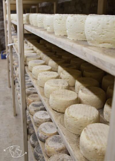 Visite de ferme en Lozère - Cave a fromage - Ferme Ressouche