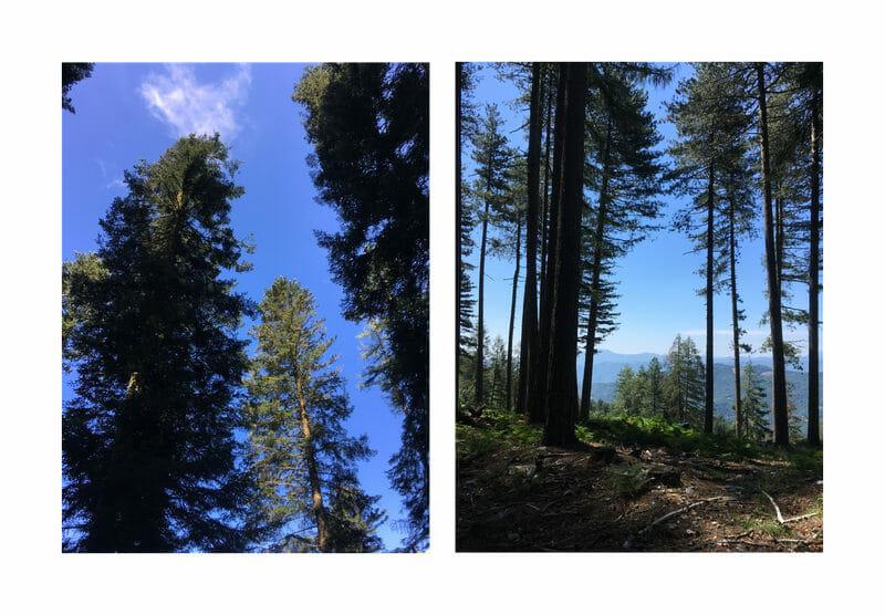Chemin de Stevenson - Biptique forêt des Cévennes