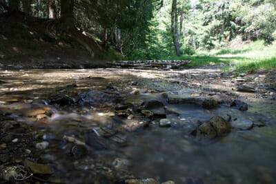 Chemin de Stevenson - Rivière au fond des bois