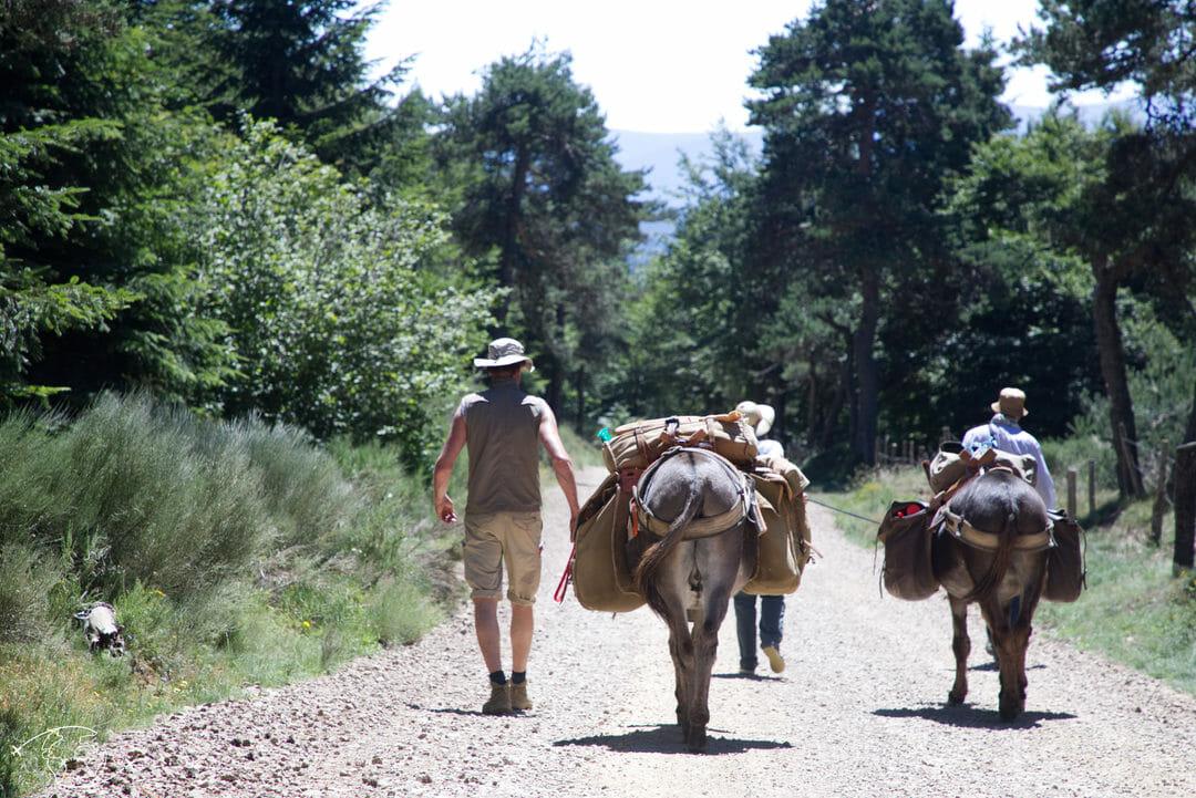 Pablo me dirige sur le chemin de Stevenson - Randonnée avec un Ane