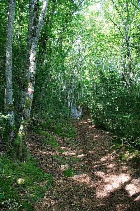Randonnée Larzac - Forêt entre Cornus et la Couvertoirade