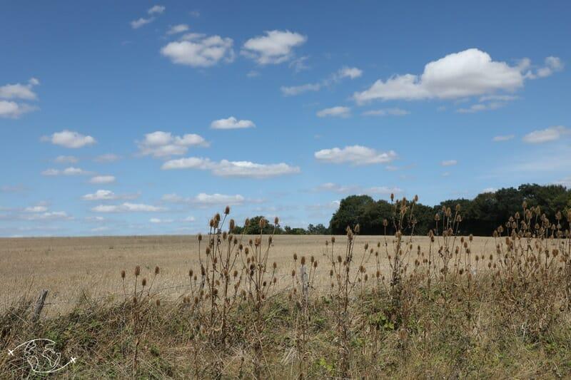 Dans le Marais Poitevin à travers champs