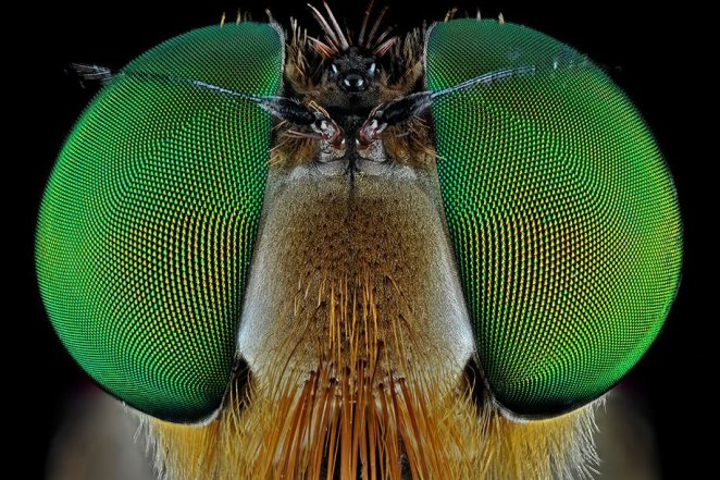 insects-macro-photography-donald-jusa-23