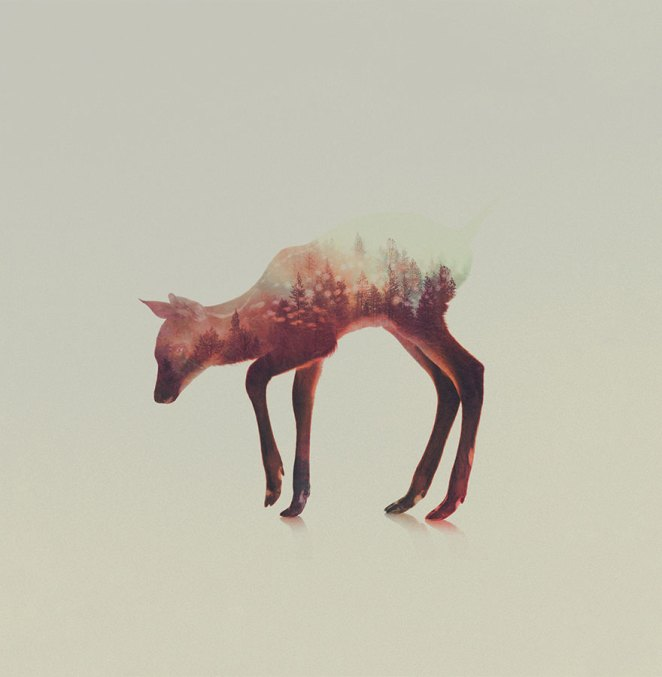 double-exposure-animal-photography-andreas-lie-14__880