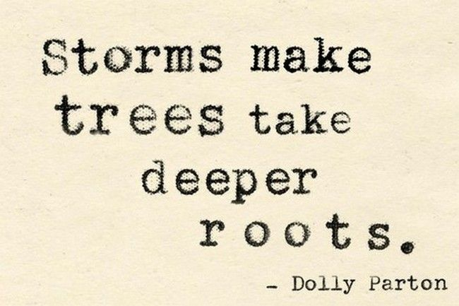 storms-makes-trees-take-deeper-roots