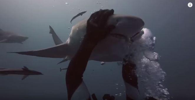 shark-human