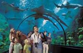 Aquarium de requin en Loro Parque