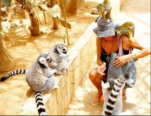 Monkey park Tenerife