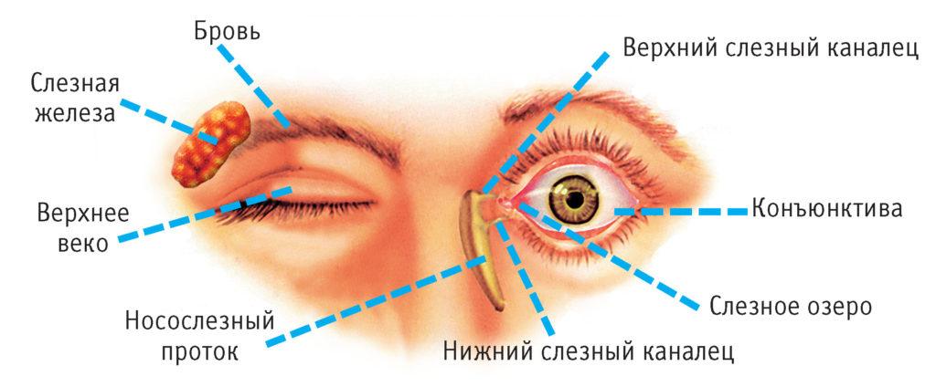 canalul lacrimal este totul despre vedere