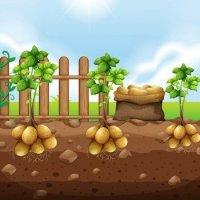 Картошка в стихах для детей
