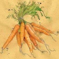 Морковка в стихах для детей