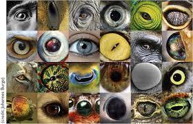 kumpulan artikel manfaat dan khasiat hewan