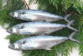Manfaat Ikan Tenggiri Untuk Kesehatan: Dari Ketombe Hingga Kesuburan Wanita