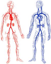 Pengertian Terkait Pembuluh Darah
