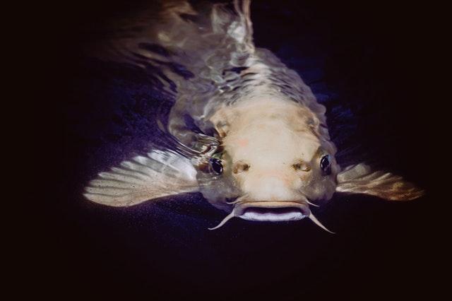 18 Arti Mimpi Ikan Lele Yang Wajib Diketahui | detikLife