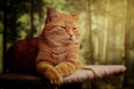 10 Arti Mimpi Kucing Dan Maknanya Bagi Peruntungan Hidup Detiklife