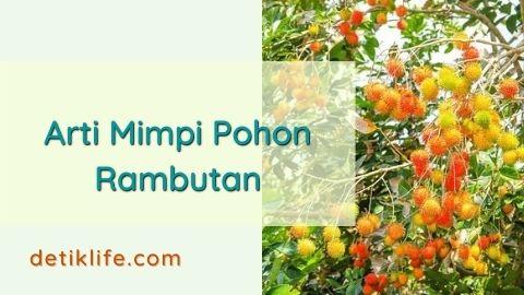 Bermimpi Pohon Rambutan