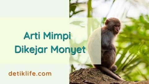 Bermimpi Dikejar Monyet Coklat