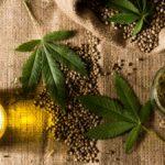 ¿Cuál es la diferencia entre cáñamo y marihuana?