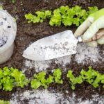 Cómo saber cuándo su planta necesita fertilizante y cuándo es demasiado