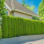 Cómo crear una cerca natural con árboles y arbustos