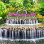 Consejos de decoración inspirados en los jardines botánicos para su hogar