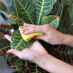 Cómo limpiar sus plantas de interior (y por qué debería hacerlo)