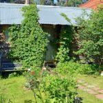 Estas plantas y árboles realmente pueden reducir el valor de reventa de su casa