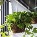 La forma más inteligente de colgar plantas en sus ventanas y ahorrar espacio