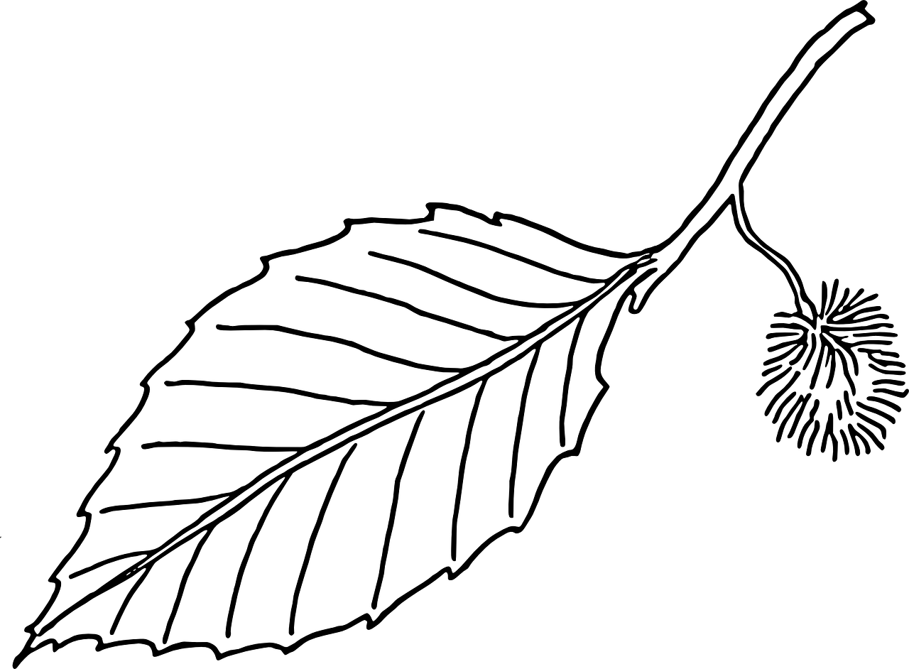 Free Printable Leaf Coloring Pages For Kids 11 Pics