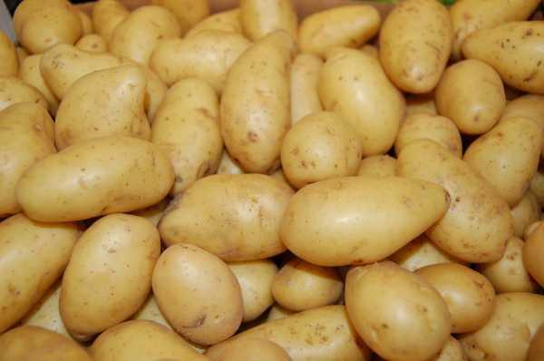 Картофель рисунок для детей – Раскраска картошка ...