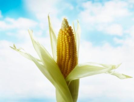 kukorica selyem fogyás kert eden fogyókúra bár