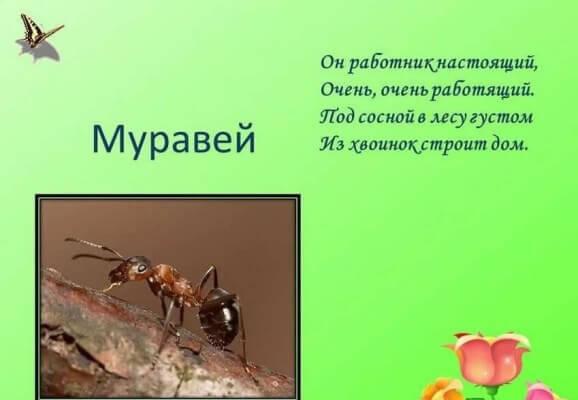Загадки про насекомых для детей 45 лет с ответами Всё о