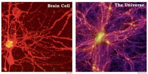 Creierul se modelează în funcție de ceea ce gândim