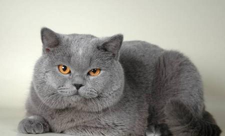 Mladé ryšavka mačička