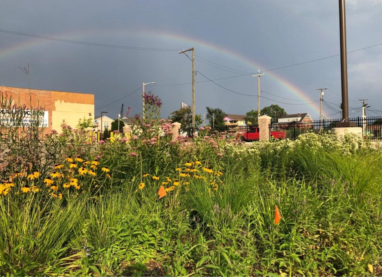 rainbow in dark sky over green field