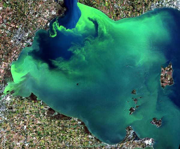 algal bloom in moderate summer