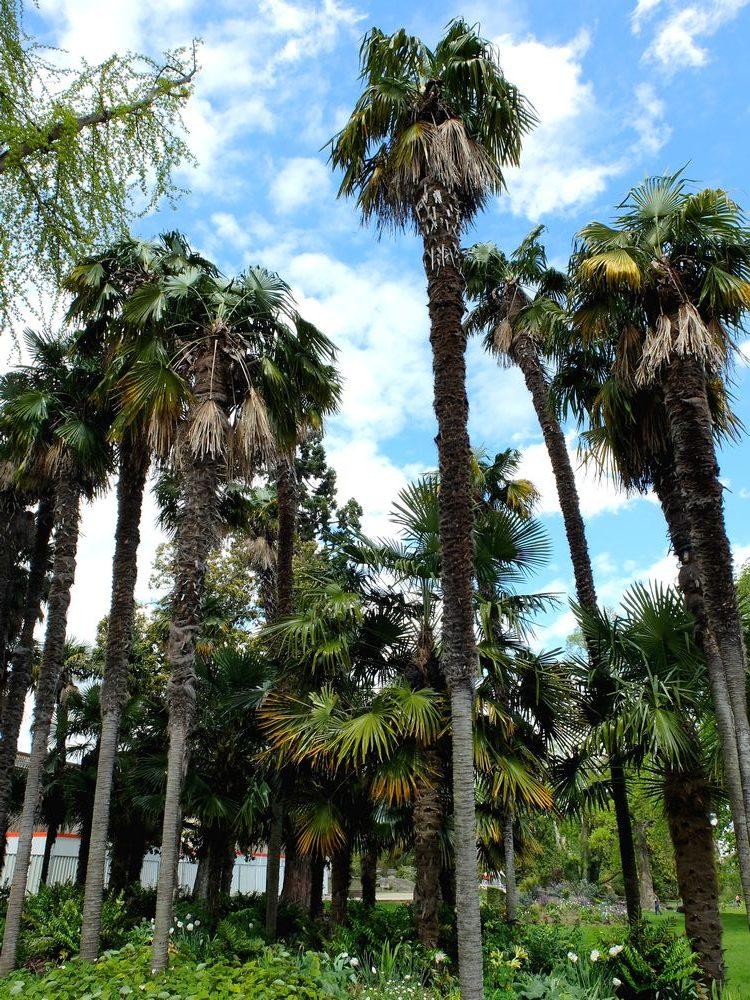 bordeaux-palmiers-jardin-public_blog detours du monde