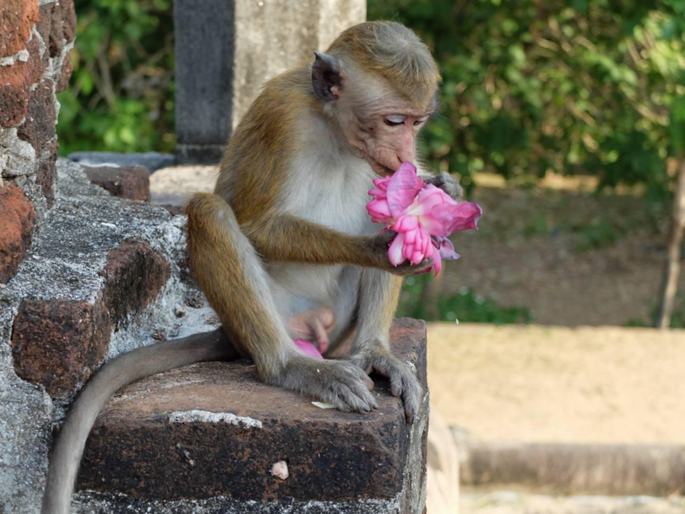 polonnaruwa singe temple
