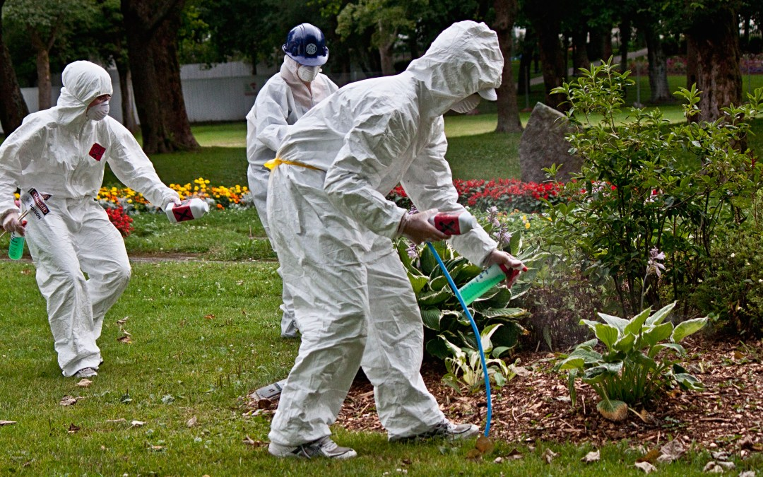 """How safe are """"safe"""" levels of glyphosate?"""