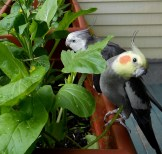 With Sally bird and bokchoy plants :)