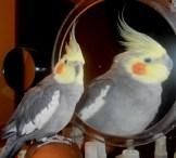 Winnie and Winnie in the mirror,