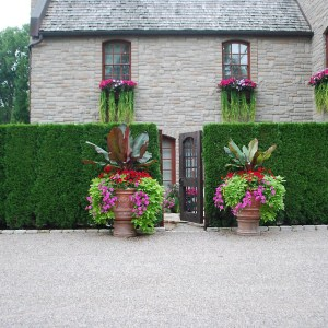 pots and window boxes