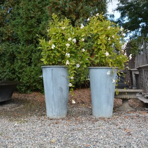 handled-galvanized-pots