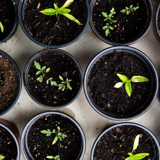 seeds // potted plants // VEGETABLE SEEDLINGS; PHOTO BY MARKUS SPISKE; UNSPLASH