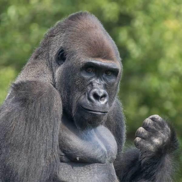 Animals - Detroit Zoo
